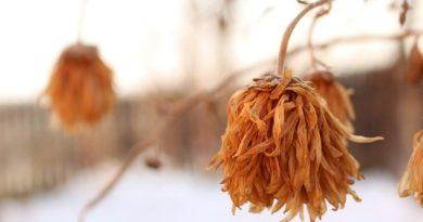Алопеция: Этот набор сделает твои волосы гладкими, шелковистыми и ЗДОРОВЫМИ! ⠀⠀ Шампунь + Бальз...