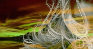 При очаговой алопеции очаги зарастают белыми пушковыми волосками почему